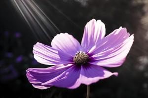 flower-213415_640